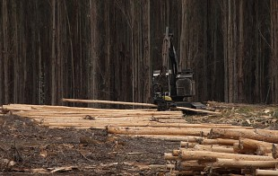 Sustainable Timber Harvesting in Native State Forests