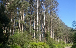 Forests and forestry in NSW