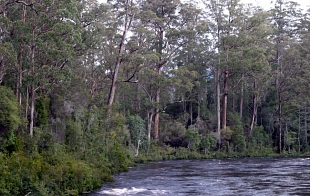 Forests and their impact on water quality and quantity